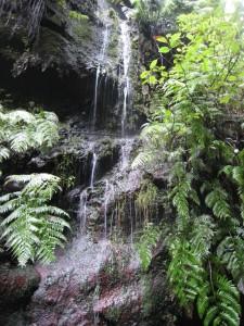 La Palma-Los Tilos-waterval vlakbij bezoekerscentrum